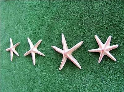 STARFISH MOULD  For Plaster or Cement -  Indoor or Outdoor Decor