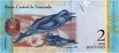 A Spectacular Six Piece Set of Venezuela Currency with Neat Animals - CH CU