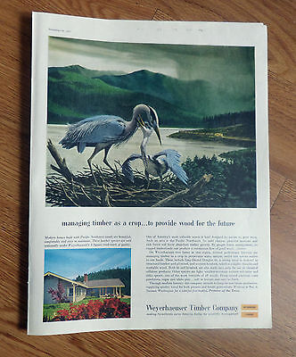 1957 Weyerhaeuser Timber Ad Birds ?