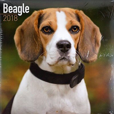 """Beagle 2018 Wall Calendar by Turner/Avonside/Lang (12"""" x 24"""" when opened)"""