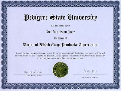 Doctor Guinea Pig Appreciation Novelty Diploma Gag Gift Joke