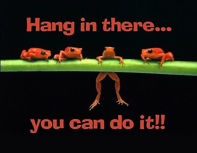 METAL MAGNET Frogs One Hanging From Limb Hang In There Amphibian Family