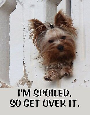 METAL REFRIGERATOR MAGNET Dog I'm Spoiled So Get Over It Yorkie Dogs Humor