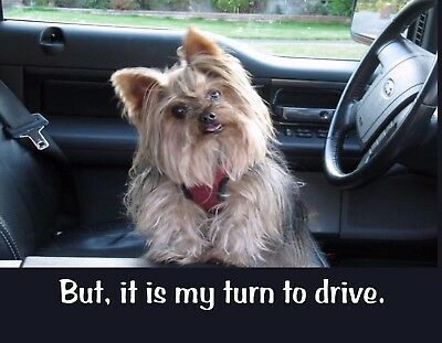 METAL REFRIGERATOR MAGNET Yorkie Car But It Is My Turn To Drive Dog Dogs Humor