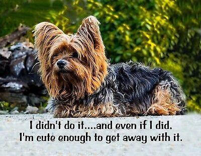 METAL REFRIGERATOR MAGNET Yorkie Dog Didn't Do It Cute Get Away With It Humor