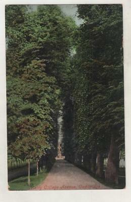 CAMBRIDGE - TRINITY COLLEGE AVENUE Postcard *