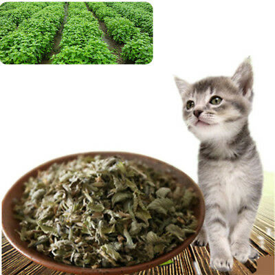 10g Dried Organic Dried Catnip Nepeta cataria Leaf & Flower Herb oz Bulk Good