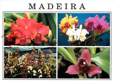 Picture Postcard:;Madeira (Multiview) Orchids