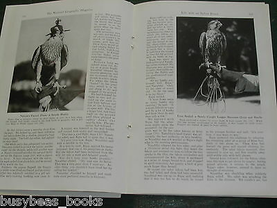 1942 magazine article about the Maharaja, INDIA, Falconry etc