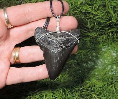 2 7/16'' Megalodon Tooth Necklace/jewelry/megalodon Fossil Teeth