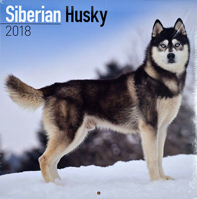 "Siberian Husky 2018 Wall Calendar by Turner/Lang/Avonside (12"" x 24"" when open)"