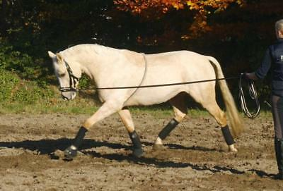 Busse Lunging Aid Cotton Lunging Without Lunging Girth Longe Reins Cotton