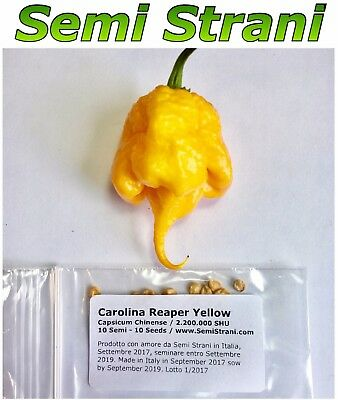 10 Pure Seeds CAROLINA REAPER YELLOW Worlds Hottest Chili Pepper