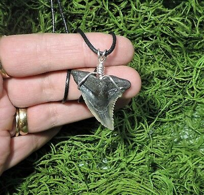 Nice 1 7/16'' Hemepristis Serra Tooth Necklace/jewelry/megalodon Fossil Teeth