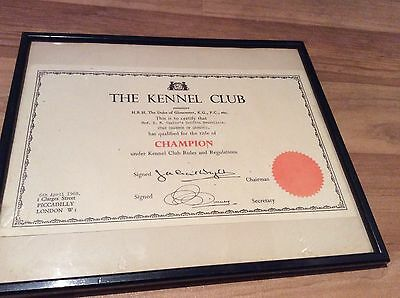 1968 The Kennel Club Certificate- Griffon Bruxellois Champion (Framed)
