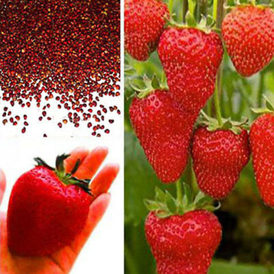100Pcs/Pack Red Strawberry Seeds Planting Garden Home Fruit Rare Juicy Delicious