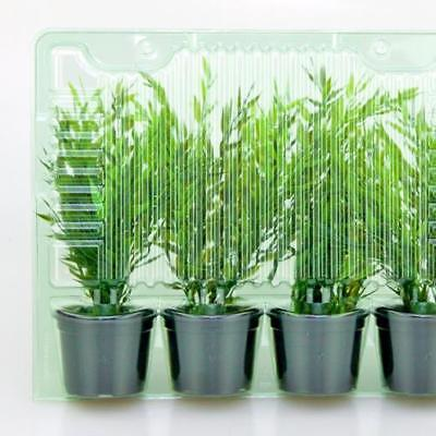 Mail Order Plant Packaging. Blister Packs For 4 x 22 cm  High Foliage Plants