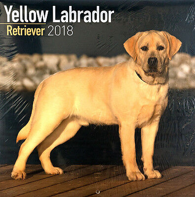 "Yellow Labrador Retriever 2018 Wall Calendar by Turner/Avonside (12"" x 24"" open)"