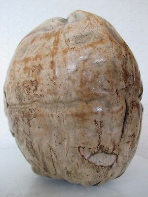 Most Unusual - Huge - Antique Oversized Nut possibly Fijian - Pacific ? Curio