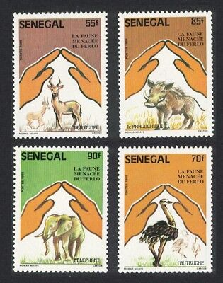 Senegal Ostriches Birds Elephants Antelopes Endangered Fauna in Ferlo National