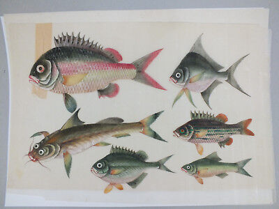 10) FINE CHINESE WATER COLOUR STUDY ON RICE/PITH PAPER OF SPECIES OF FISH 19thC