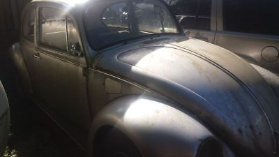 Last edition beetle no 84  project