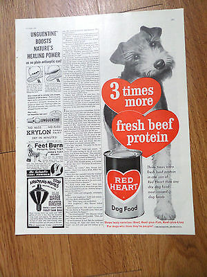1960 Red Heart Dog Food Ad  Fox Airdale Terrier