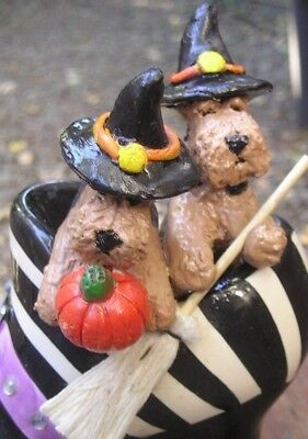 Welsh Terrier pair in a WITCH'S BOOT!