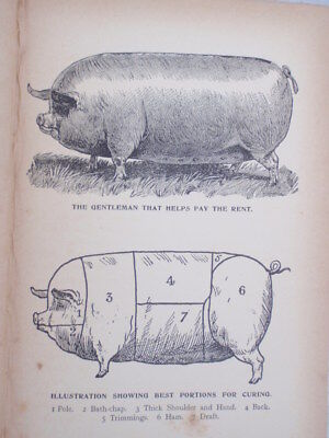 Home  Butchering  illustrated  1940's