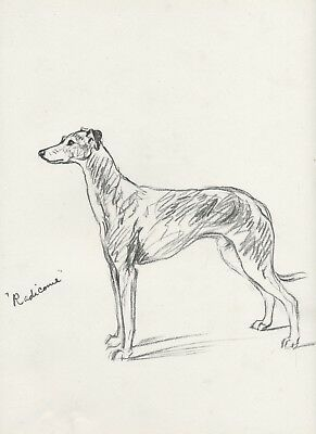 Greyhound Beautiful Standing Dog Sketch Lucy Dawson Dog Print
