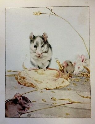 1938 The Book of Baby Pets - illustrated in Colour by E.J. Detmold