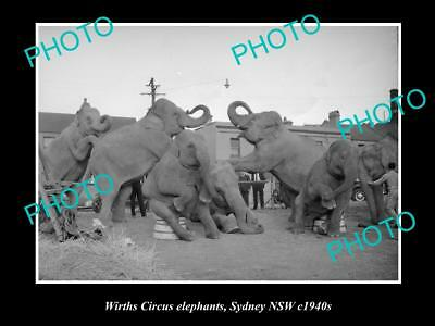OLD HISTORIC PHOTO OF WIRTHS CIRCUS ELEPHANTS PERFORMING TRICKS, SYDNEY c1940