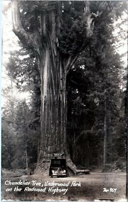 Rppc underwood park redwood highway ca chandelier tree c1940s zan rppc underwood park redwood highway ca chandelier tree c1940s zan postcard aloadofball Choice Image