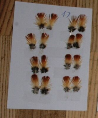 Indian Crow SUB feathers