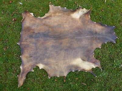 Nice New Real Goat Rawhide/Parchment - Shamanic Drum - Taxidermy - Pagan