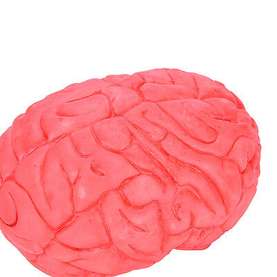 Scary Haunted House HUMAN BRAIN Organ Body Part Halloween Horror Prop Decor IG