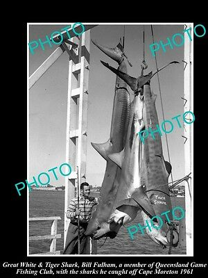 Old Large Historic Photo Of Great White Shark Bring Caught In 1961, Game Fishing