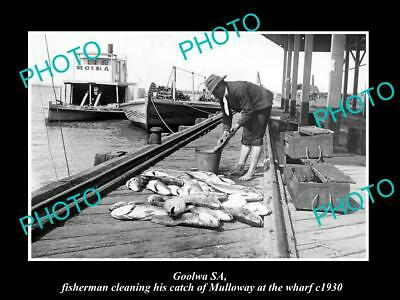 OLD LARGE HISTORIC PHOTO OF GOOLWA SA, FISHERMAN WITH A CATCH OF MULLOWAY c1930