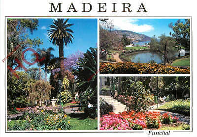 Picture Postcard; Madeira, Funchal (Multiview) Botanical Gardens?