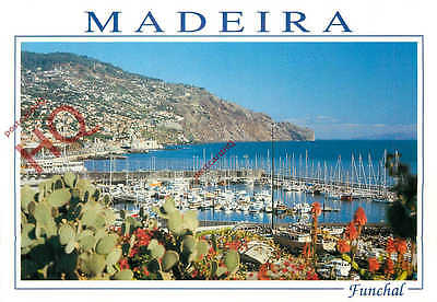 Picture Postcard, Madeira, Funchal, Marina