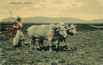 Picture Postcard--Quetta, Ploughing Land