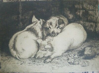 C.F. Tunnicliffe pig art etching postcard in aid of Lost Gardens of Heligan