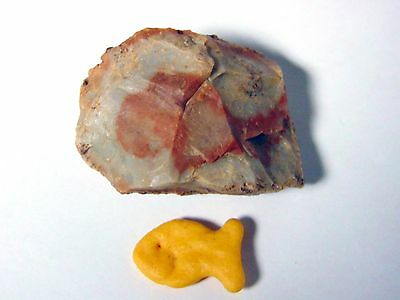 Pepperidge Farm Gold Fish Goldfish FOSSIL Incredible One of a Kind Find