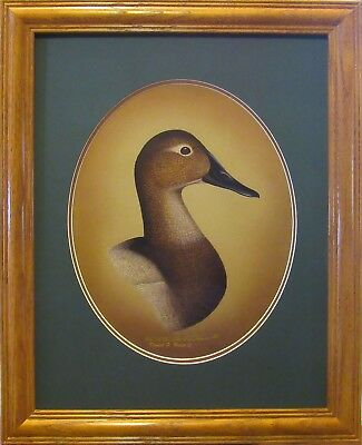 Ducks Unlimited Canvasback Hen-Duck Decoy Den-Fishing Den-Hunting Trophy-Look !!