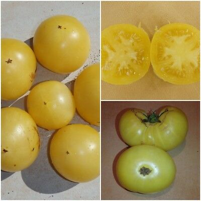 "40 Graines Tomate ""GOLDEN DWARF CHAMPION"" extra!  - Frais de port Unique !!"