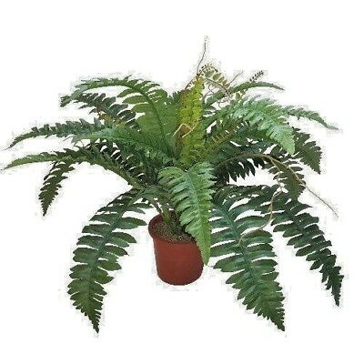 (GREENWOODS) 50cm LARGE BOSTON FERN BUSH GREEN  ( POT NOT INCLUDED )