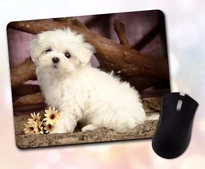 Animals ~ Dog, Maltese, Puppy, Posed, White, Adorable ~ Vivid Mouse Pad 28