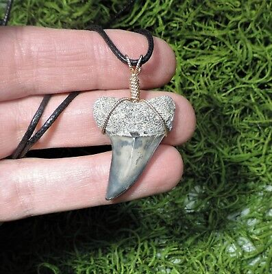 1 7/16'' Mako Sharks Tooth Necklace/jewelry/megalodon Fossil Sharks Teeth