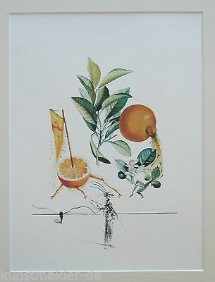 DALI Salvador FRUITS 352: Erotische Pampelmuse / Pamplemousse érotique