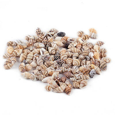 100x Small Bulk Natural Sea Beach Shell Conch Seashells For DIY Crafts Decor New